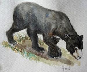 Pris sur le vif : l'ours malais (aquarelle de Michel Grenet)