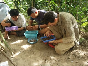 ak Adhi, Pak Rustyn and François-Xavier Ricaut are looking for seeds, charcoal, little bones pieces and lithic chips.
